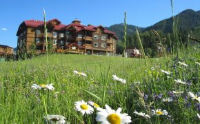 Cornerstone Lodge Fernie – Summer Flowers
